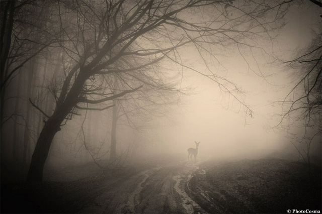 Rumania Bosque Magico